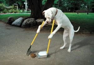 Doggie Pooper Scooper