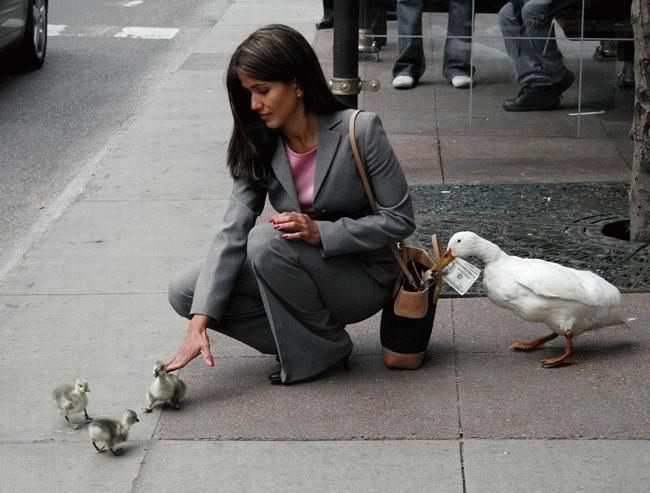duck stealing cash from distracted woman