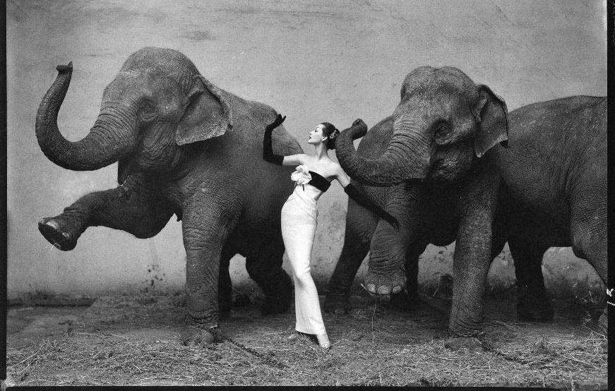elephants dancing with woman