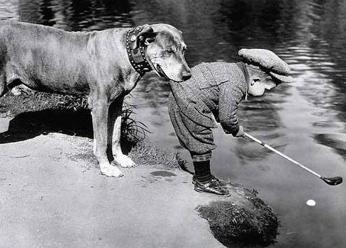 dog holding boys clothing while boy takes a golf swing