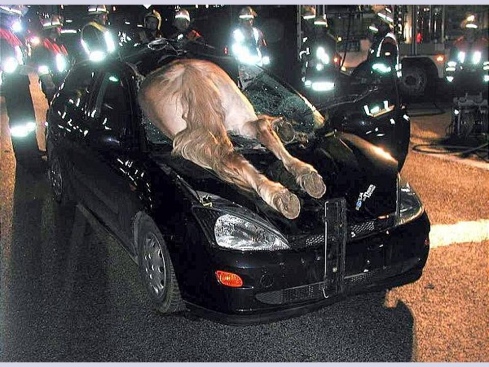 horse in windsheild of car