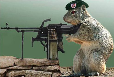 squirrel aiming mounted gun